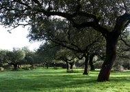Woodlands in Los Pedroches Valley